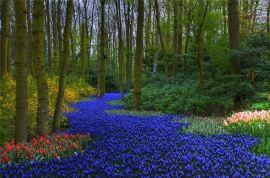 Keukenhof gardens – Netherlands