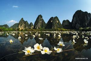 Chine biodiversité
