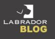 Labrador blog
